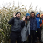 Corn Maze – October